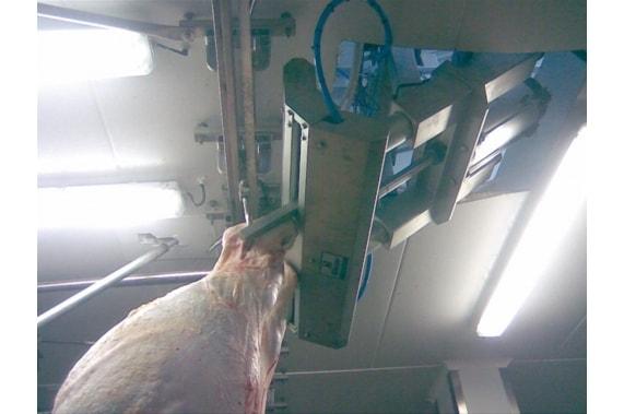 Система усиления для снятия шкуры КРС BLASAU